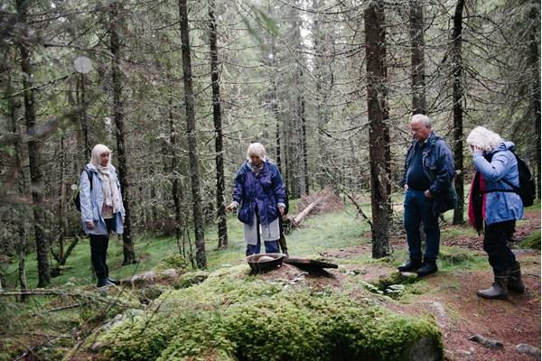 fire personer på tur i skogen
