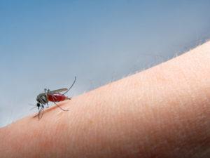 Mygg sitter på hud